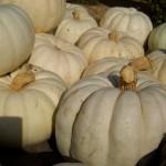 pale pumpkins
